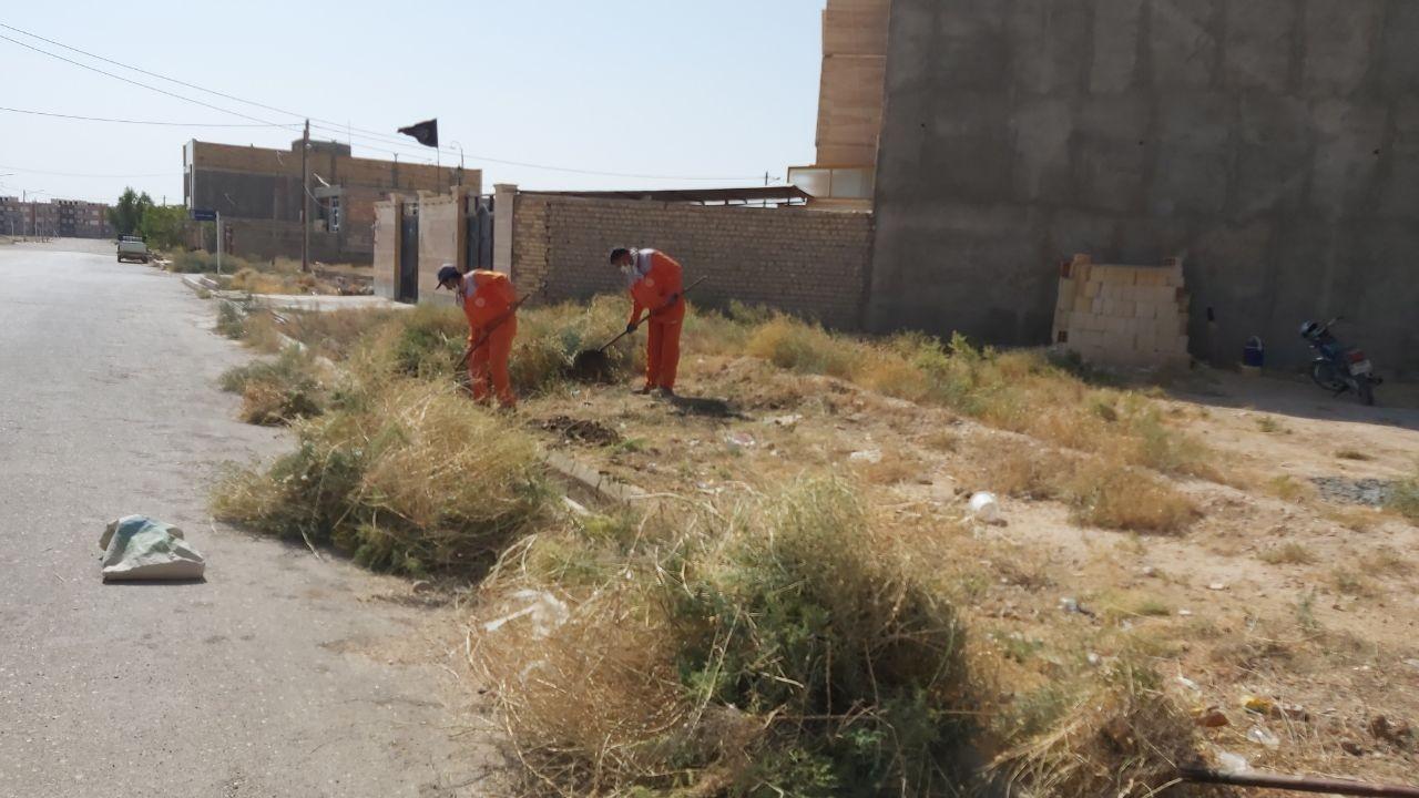علف زنی خیابان عارف جاجرمی توسط پرسنل زحمت کش خدمات شهری
